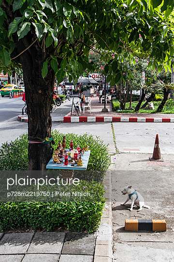 Thailand, Bangkok,  Altar in front of a tree with a dog - p728m2219750 by Peter Nitsch