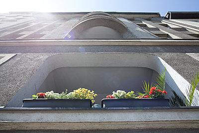 Balcony plant - p1043m1091286 by Ralf Grossek