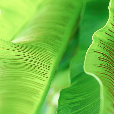 Close-up of leaves in park - p1166m1541813 by Cavan Social