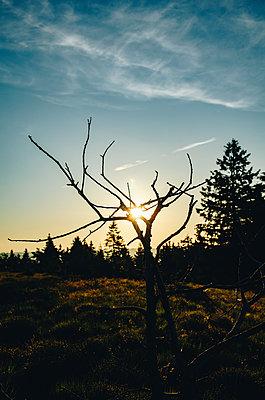 Sonnenuntergang im Schwarzwald - p1455m2045310 von Ingmar Wein