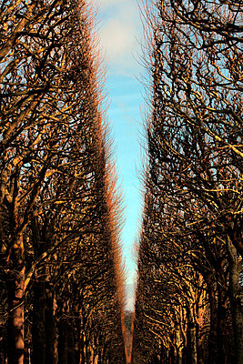 Line of trees - p8730017 by Philip Provily