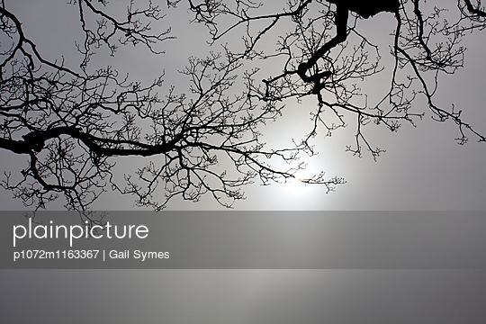 p1072m1163367 von Gail Symes