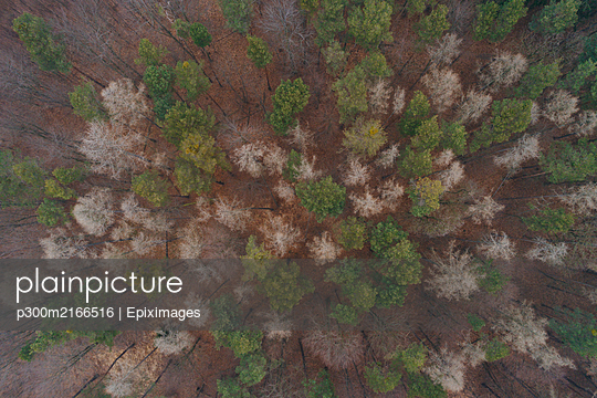 aerial drone flight over beautiful foggy wienerwald, forest in winter without snow, lower austria - p300m2166516 von Epiximages