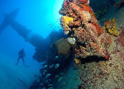 Scuba diver on shipwreck. - p9243605f by Image Source