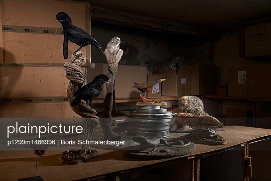 Tierpräparate - p1299m1486996 von Boris Schmalenberger