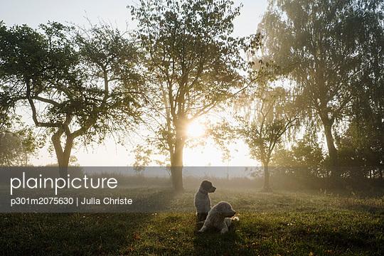 p301m2075630 von Julia Christe