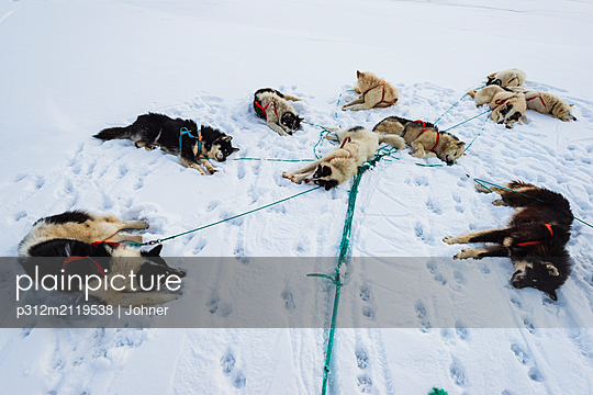 Dogs lying on snow - p312m2119538 by Johner