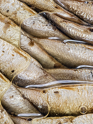 Sprats - p401m2128646 by Frank Baquet