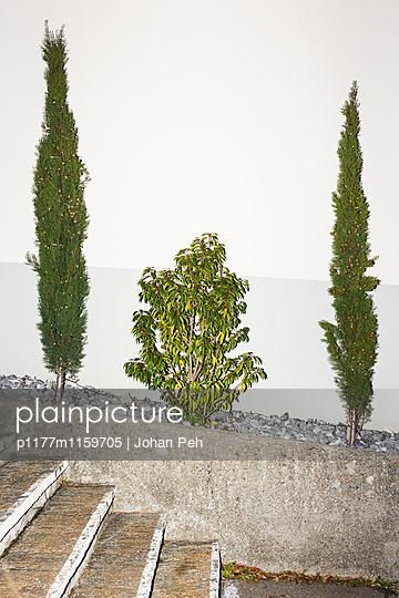 Pflanzen - p1177m1159705 von Philip Frowein