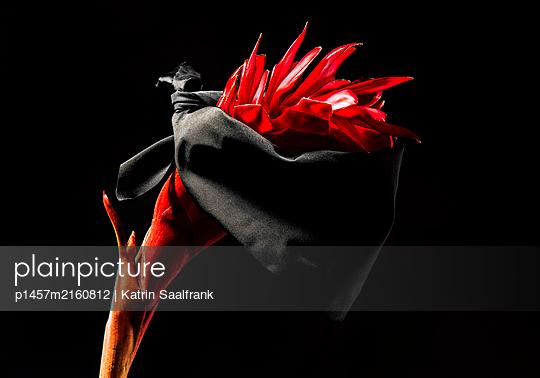 p1457m2160812 by Katrin Saalfrank