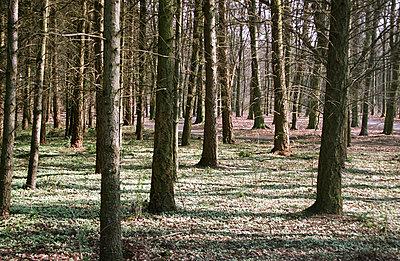 Wald im Frühling - p0090106 von Erwin