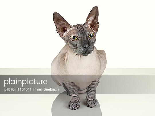 Nude Cat - p1318m1154941 von Tom Seelbach