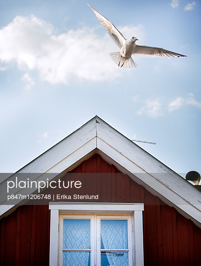 A Bird Flies Over The Roof Of A Red Wooden House