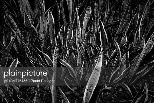p912m776135 von Paolo Pellegrin