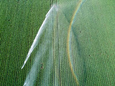 Künstliche Bewässerung  - p1079m2157739 von Ulrich Mertens