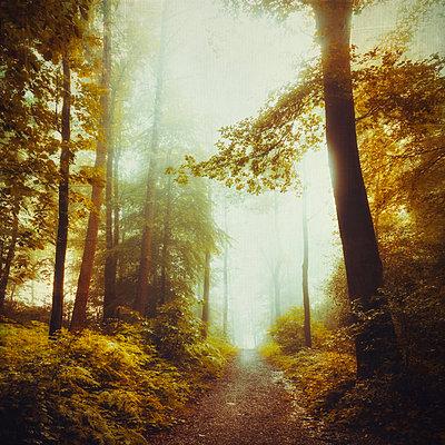 Deciduous forest in spring, forest path - p300m1166785 by Dirk Wüstenhagen