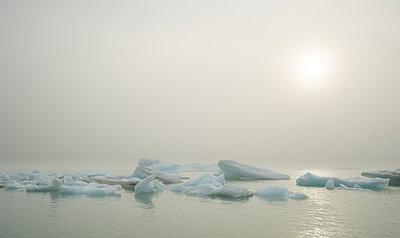 Marine fog and icebergs on Alsek Lake, Alsek River - p343m1217888 by Josh Miller Photography
