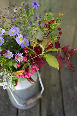 Herbstblumen - p454m764440 von Lubitz + Dorner
