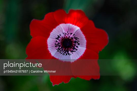 p1545m2187937 by Caroline Wimmer