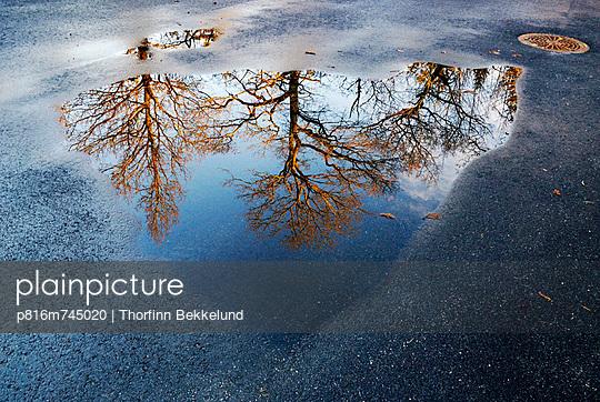 p816m745020 von Thorfinn Bekkelund