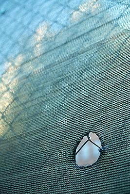 Construction fence in Manhattan, New York City - p1614m2223015 by James Godman