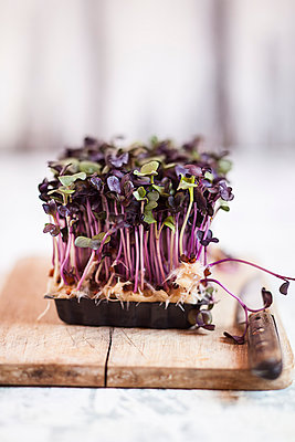 Plastic container of purple radish cress on wooden board with knife - p300m926624f by Susan Brooks-Dammann