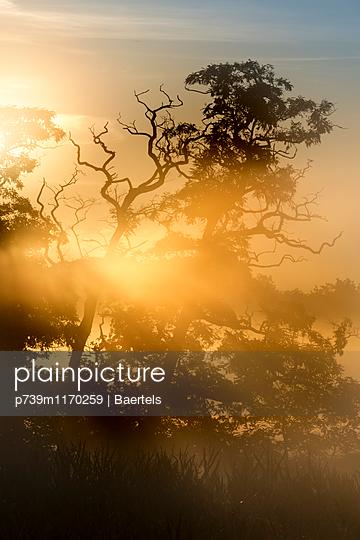 Sunrise in the morning fog - p739m1170259 by Baertels