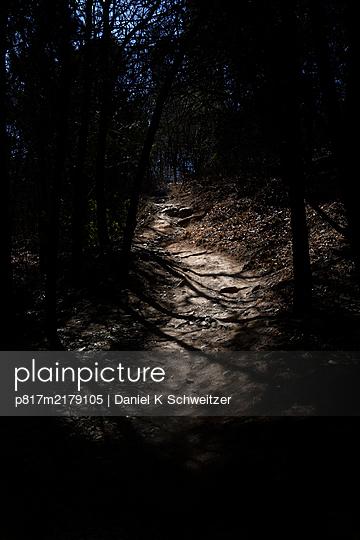 Forest track in the moonlight - p817m2179105 by Daniel K Schweitzer