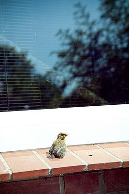 Vogel am Fenster - p1195m1195438 von Kathrin Brunnhofer