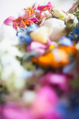 Close-up of multi colored fresh flowers - p301m1406552 by Ralf Hiemisch