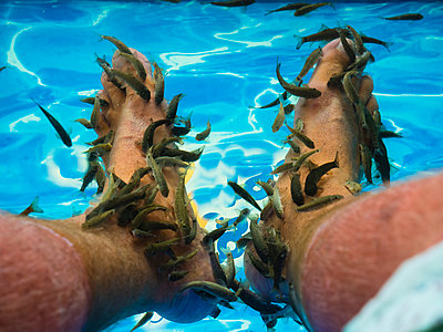Kangal fishes nibbling man's callused skin at feet - p300m1228076 by Martin Moxter