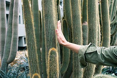 Frau fasst Kaktus an - p432m1550538 von mia takahara