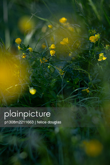 p1308m2211663 by felice douglas