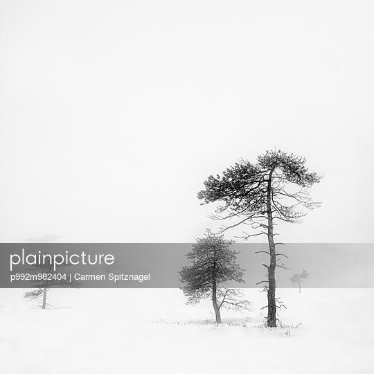 Winterlandschaft - p992m982404 von Carmen Spitznagel