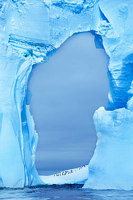 Penguins under ice arch, Antarctica - p1100m875031 by Frans Lanting