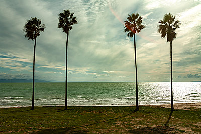 Tunisia, Tunis, Four palm trees on the beach - p280m2253497 by victor s. brigola