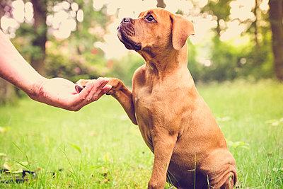 Hundeerziehung - p299m1138420 von Silke Heyer