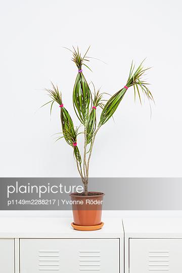 Houseplant - p1149m2288217 by Yvonne Röder