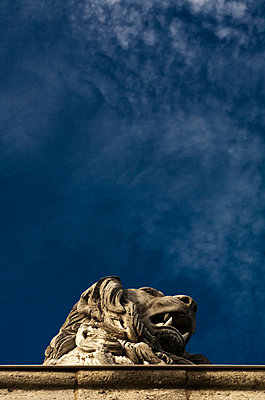 Lions head - p1032m769993 by Fuercho