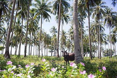 Thailand, Ko Lanta - p1308m1539511 von felice douglas