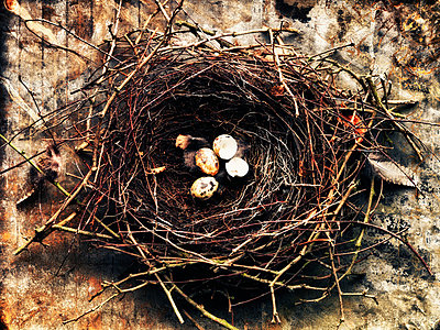Birds nest with eggs - p9241094 by Stillfactory
