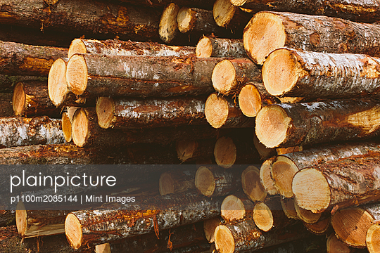 Stacked logs, freshly logged spruce, hemlock and fir trees - p1100m2085144 by Mint Images