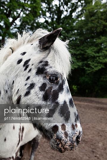 Pony - p1174m982948 von lisameinen