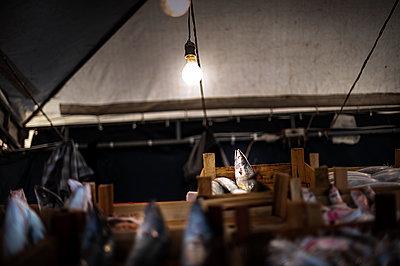 Spotlighting - p1007m1059840 by Tilby Vattard