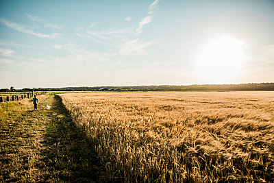 Girl walking with dog at grain field - p300m1499497 by Robijn Page