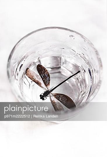 Dead dragonfly in a glass - p971m2222512 by Reilika Landen