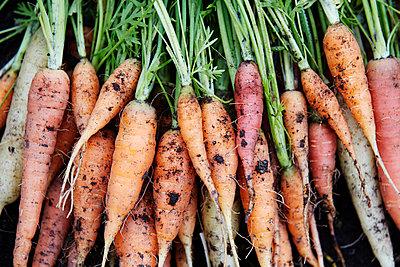Fresh carrots - p312m1229210 by Anna Kern