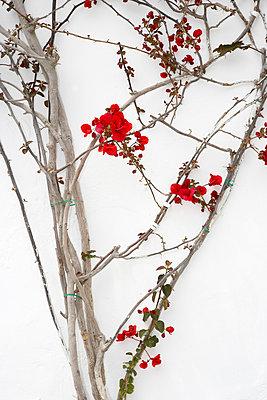 Kletterpflanze - p1205m1032959 von Christina Anzenberger-Fink