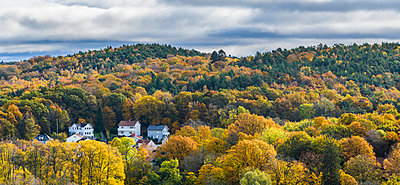 Aerial view of autumn forest - p312m1533619 by Mikael Svensson