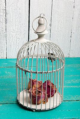 Rosen im Vogelkäfig - p451m984730 von Anja Weber-Decker